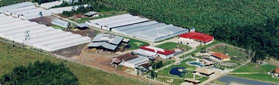 ブラジル専属栽培農場